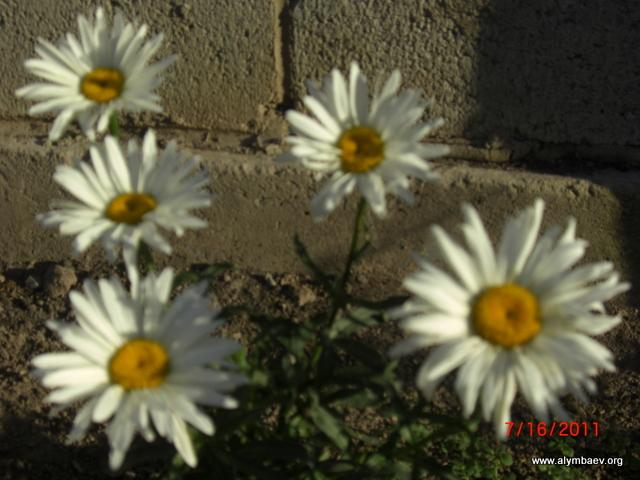 фото 036